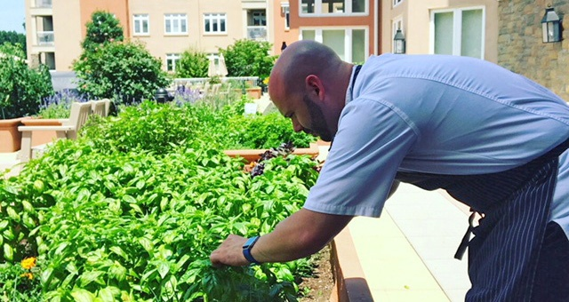 Chef Jon from Kendal on Hudson picks fresh herbs and produce from out of our gardens.