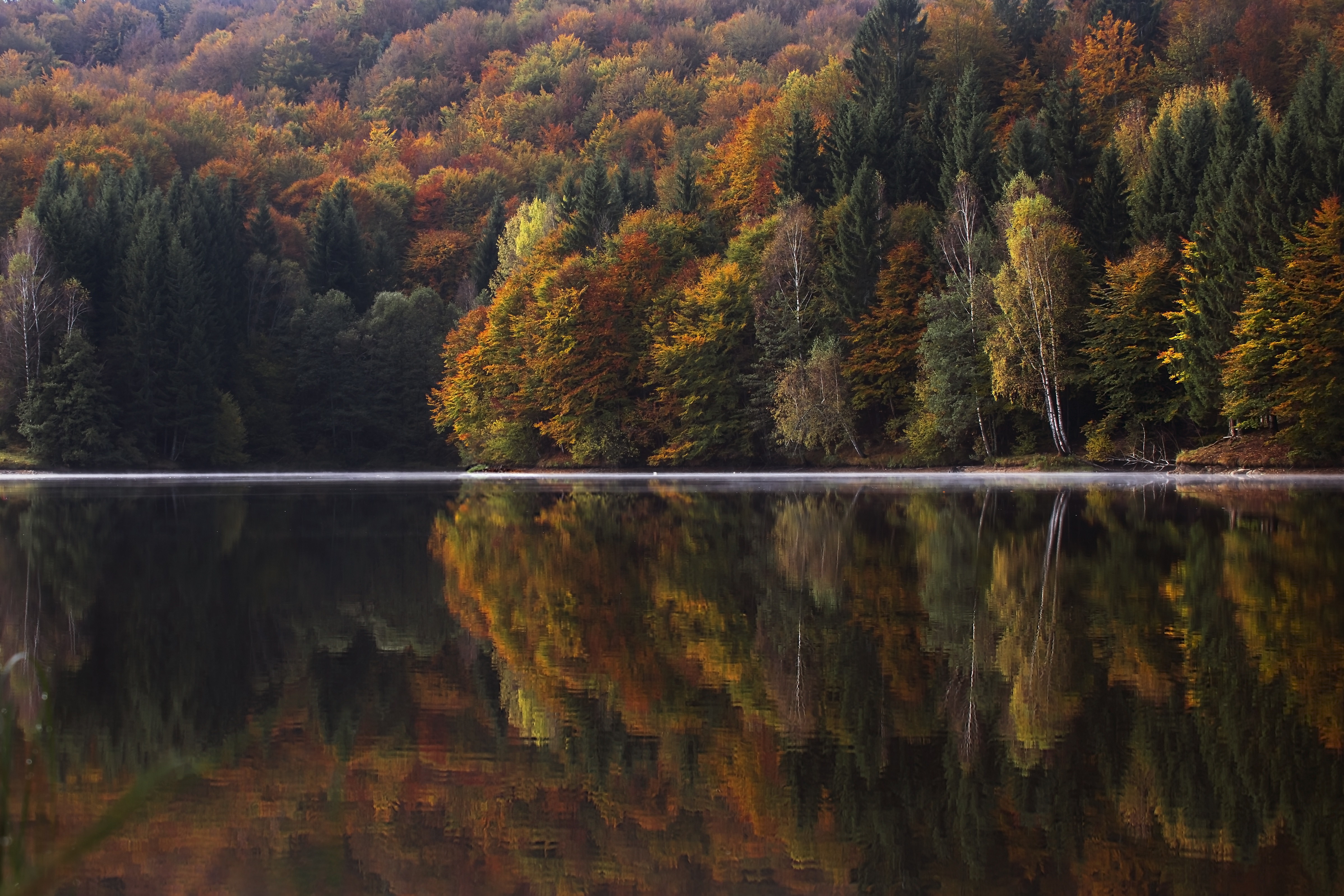 beautiful fall trees reflecting in the hudson river valley